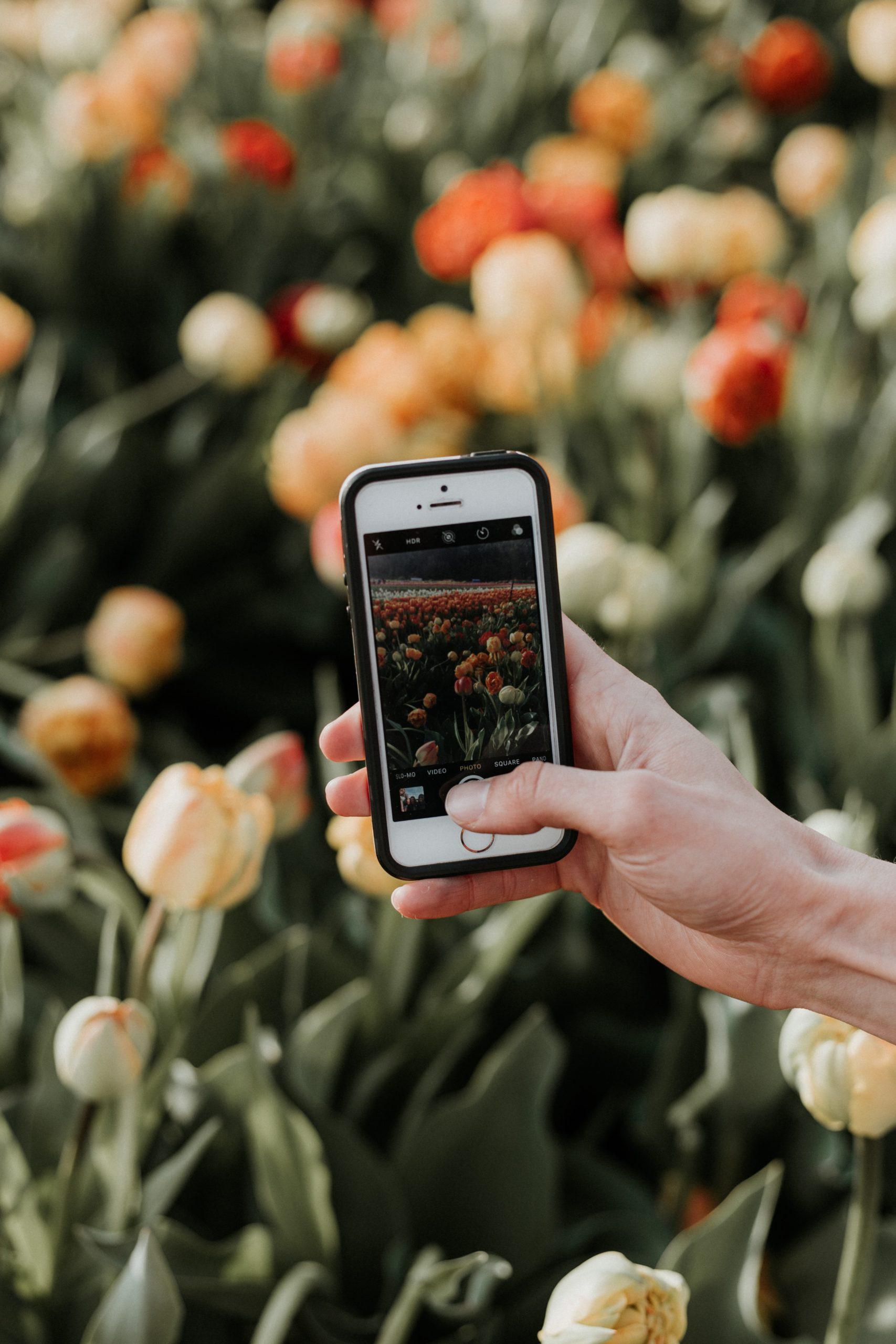 Quais os melhores aplicativos para edição de fotos em 2021?